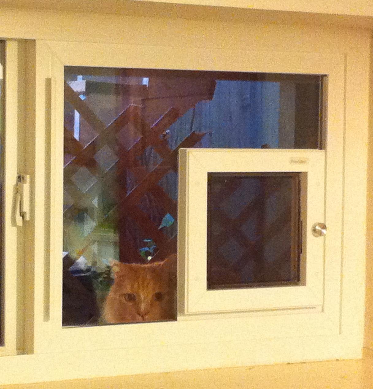 The Descision Of A Dog Or Cat Door Dog Doors Cat Doors Pet Doors