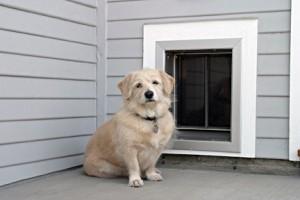 PlexiDor (Wall) DogOutside