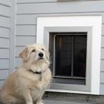 PlexiDor (Wall) DogOutside2