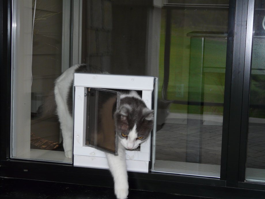 Pet Doors For Sliding & Swinging Glass Doors | Dog Doors, Cat Doors ...
