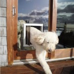 Sliding Glass patio door pet door