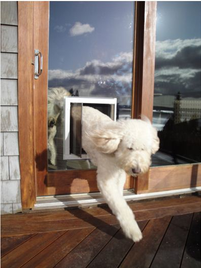 Eliminating The Cold Drafty Pet Door Dog Doors Cat Doors Pet