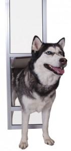 PPA11-13122-w-dog
