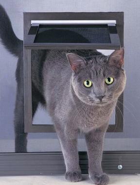 Patio Screen Door Pet Door Dog Doors Cat Doors Pet
